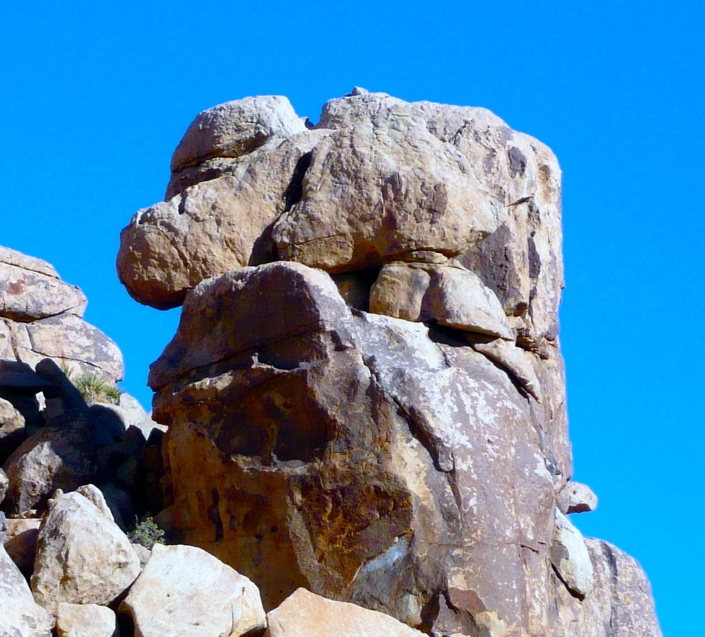 woofJoshua Tree National Park CA