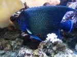 Fish - Fiji